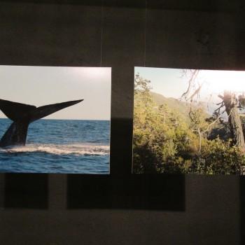 Exposición de fotos de Reservas Privadas de la red Así Conserva Chile