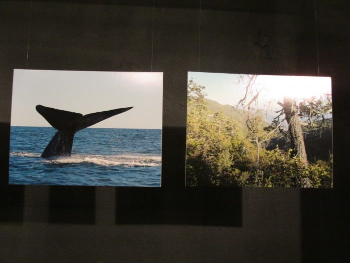 Photo Exhibition of Protected Private Areas from the Network Asi Conserva Chile