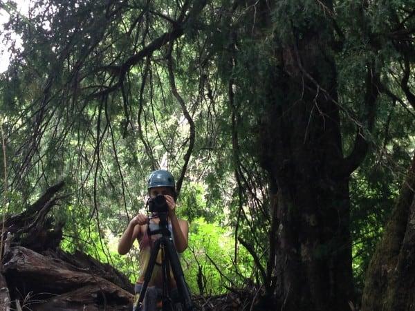 Visita a terreno, Bosque Pehuén