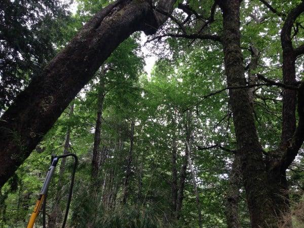 Visita a terreno Parque Bosque Pehuén