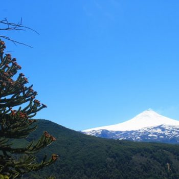 View of the Villarrica Volcanoe from Pehuén Forest