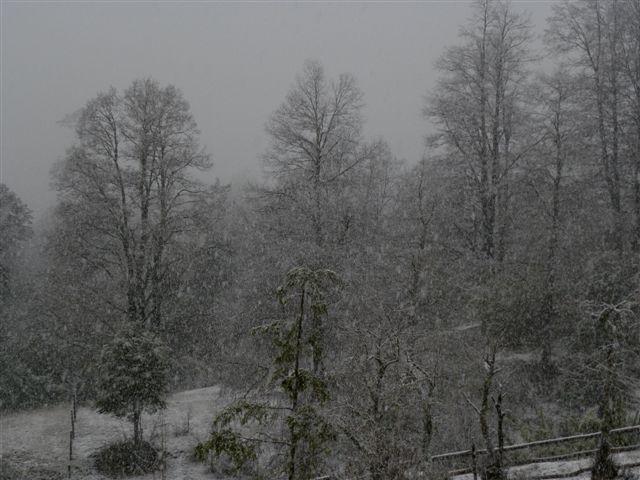 Invierno en Bosque Pehuén