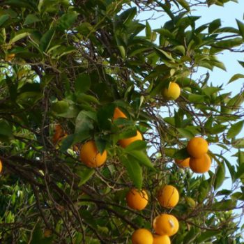 Jardín Terraza Los Naranjos