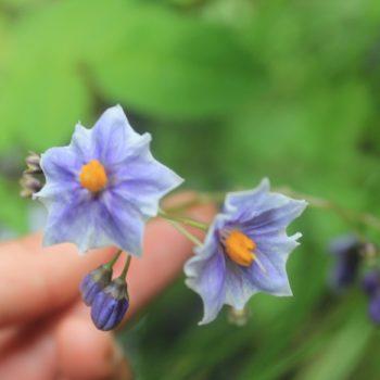 Variadas especies de flores existente en el bosque