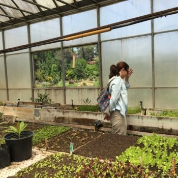 (Español) The Agroecological School's greenhouse