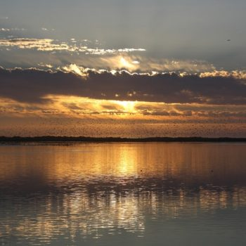 Atardecer en Humedal Río Maipo