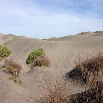 Las dunas en el Parque Humedal Río Maipo
