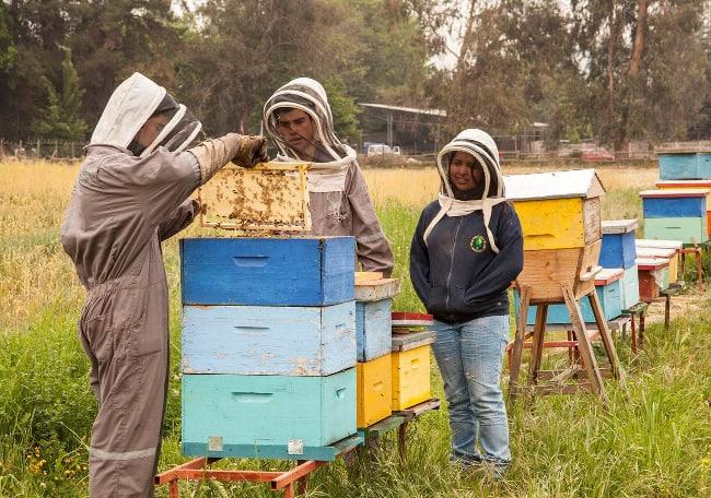 Además de sus estudios de Enseñanza Media, los jóvenes aprenden diversas actividades agrícolas
