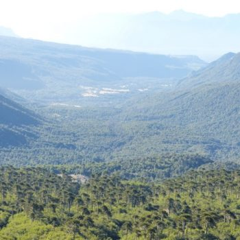 One of the amazing views of Pehuén Forest