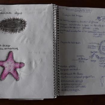 Cuaderno con dibujo de estrella de mar y anotaciones en cuaderno