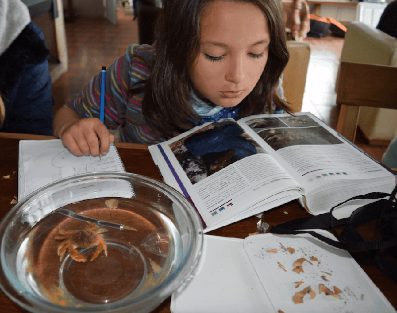 A workshop participant reviewing the contents of a scientific book while also learning through direct observation of her natural environment