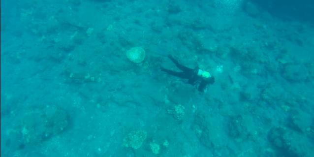 implementacion-de-estrategias-para-recuperar-el-coral