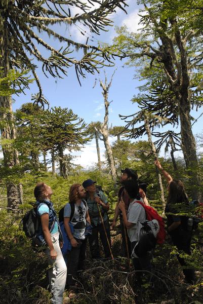 El equipo conociendo de cerca Bosque Pehuén
