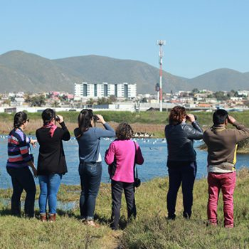 Active Teachers in El Culebrón Wetland