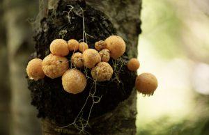 Imagen de hongos