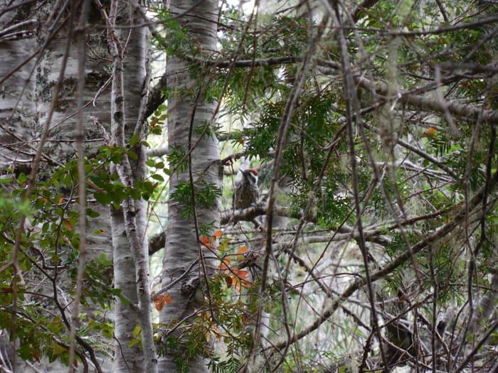 Fauna in Bosque Pehuén