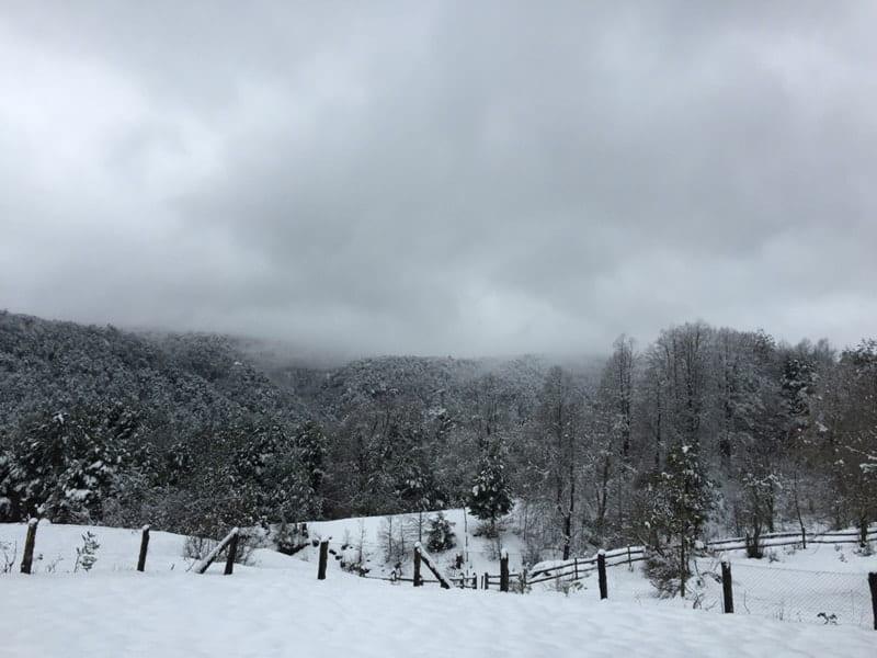 Cold snowy winters in Bosque Pehuén