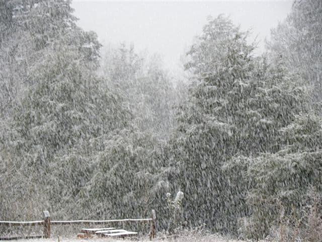 Winter at Bosque Pehuén