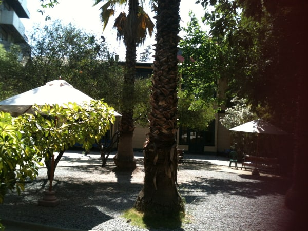 Palm courtyard