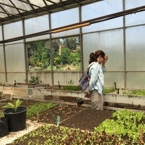 The Agroecological School's greenhouse