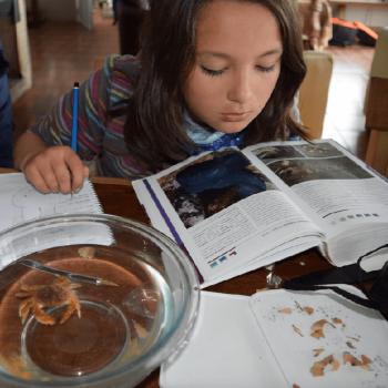 Una niña participante de los talleres revisa los contenidos en un libro, a la vez puede aprender en directo gracias al entorno en que se encuentran
