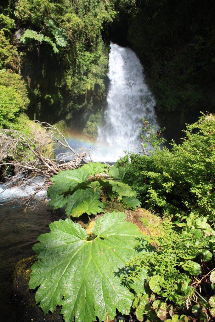 Butterfly Waterfall at Bosque Pehuén