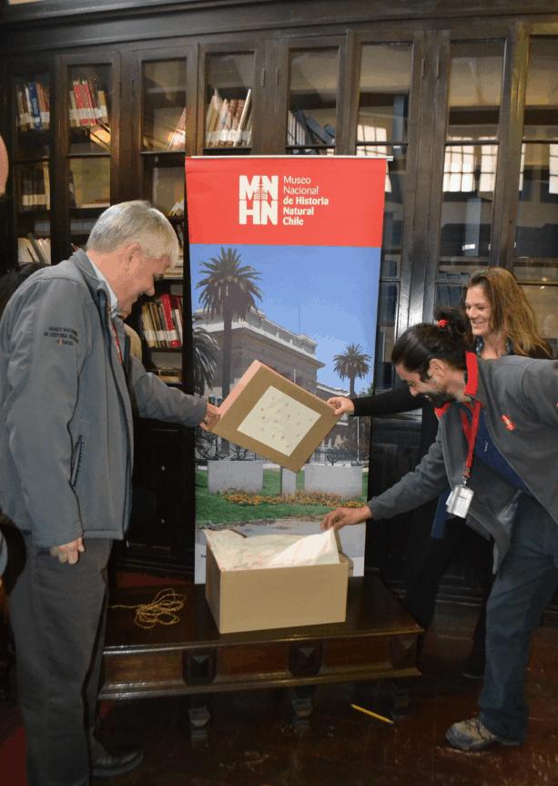 Equipo MNHN revisa el contenido de la donación de musgos
